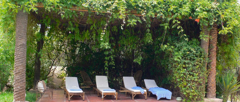 Pergola avec de nombreuses plantes pour créer un endroit agréable à l'ombre dans le jardin